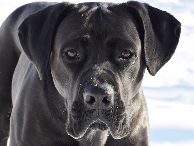 10-годишно момче беше нападнато и жестоко нахапано от 50-килограмово куче,