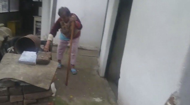 Брутално убийство на котка от възрастно семейство столичани взриви социалните