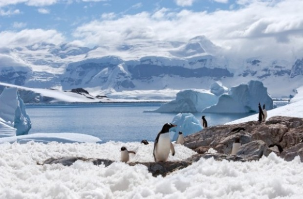 Кризата около COVID-19 не подмина и ледената Антарктида. Най-чистят континент