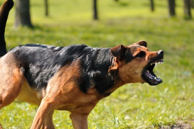 Кучета нахапаха жестоко жител на благоевградското село Логодаж. Наложило се