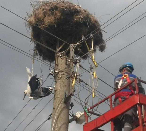 Екип на ЕРП Север организира спасяването на щъркел, оплетен във