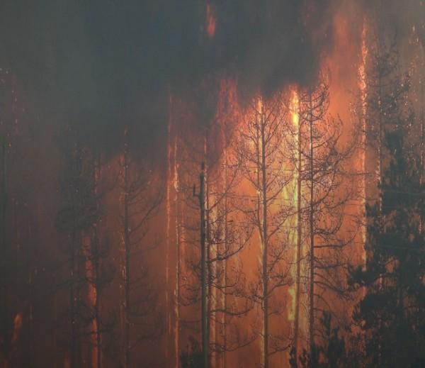 От 3 страни е ограничен пожарът при село Маточина в